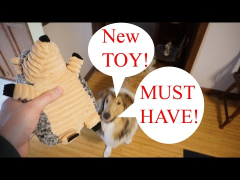 I Got My Dog New Toys!