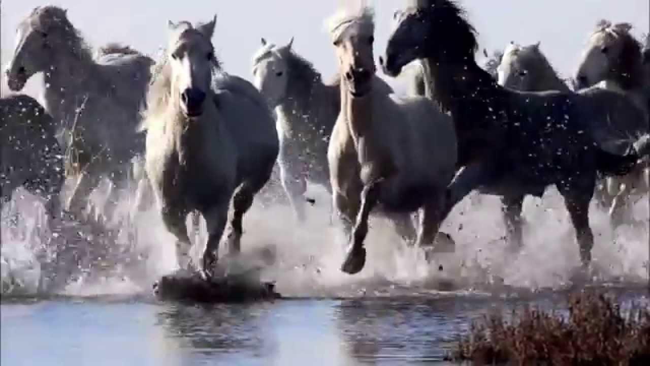 Running Wild Stream