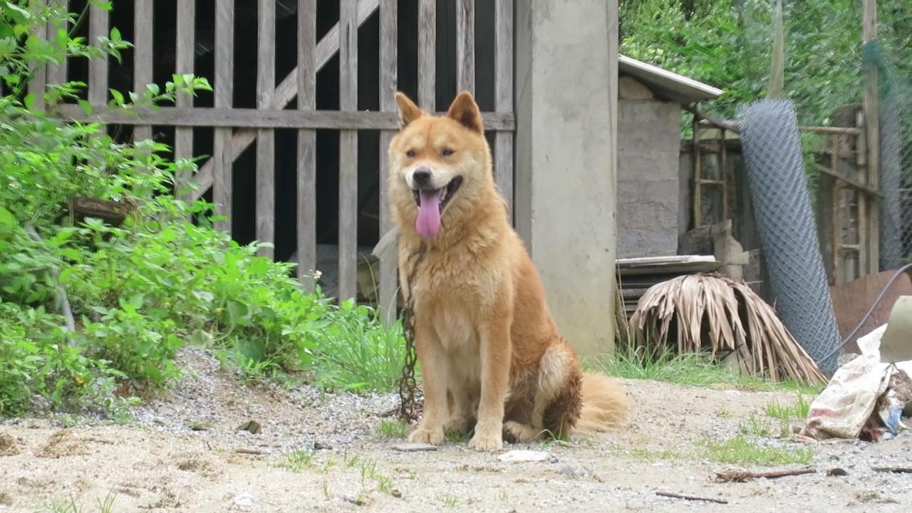 Image result for chó Bắc Hà