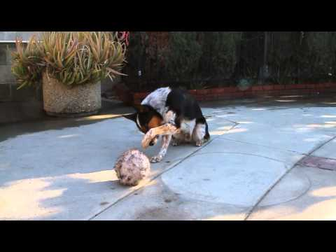 Smartest Dog In The World - Jumpy 123 trick