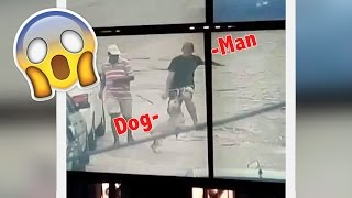 Hero Dog STOPPING THIEF Caught On Camera | What's Trending Now!