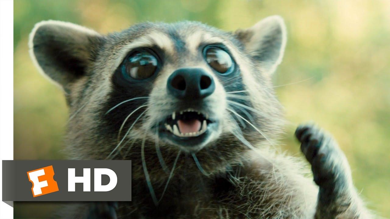 Racoons in movie