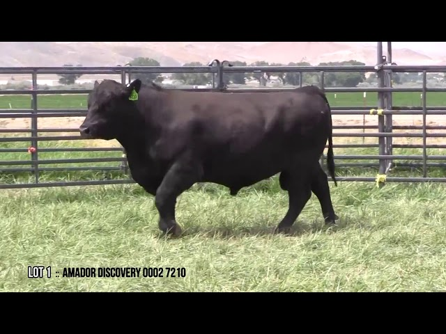 Mid Valley Bull Sale Lot 1