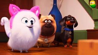 Тайная жизнь домашних животных 2 — Русский трейлер #4 (2019)