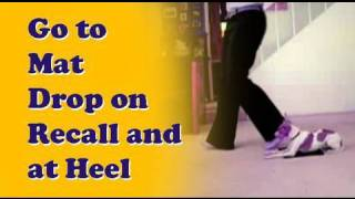How To Teach A Dog Go To Your Mat, Drop On Recall + Drop At Heel