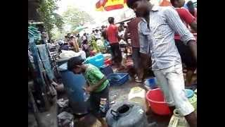 Mirza Galiff Street Aquarium Fish Market Kolkata West Bengal By