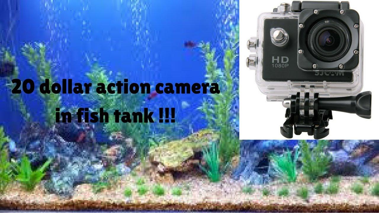 20 dollar action camera in fish tank youtube for Fish tank camera