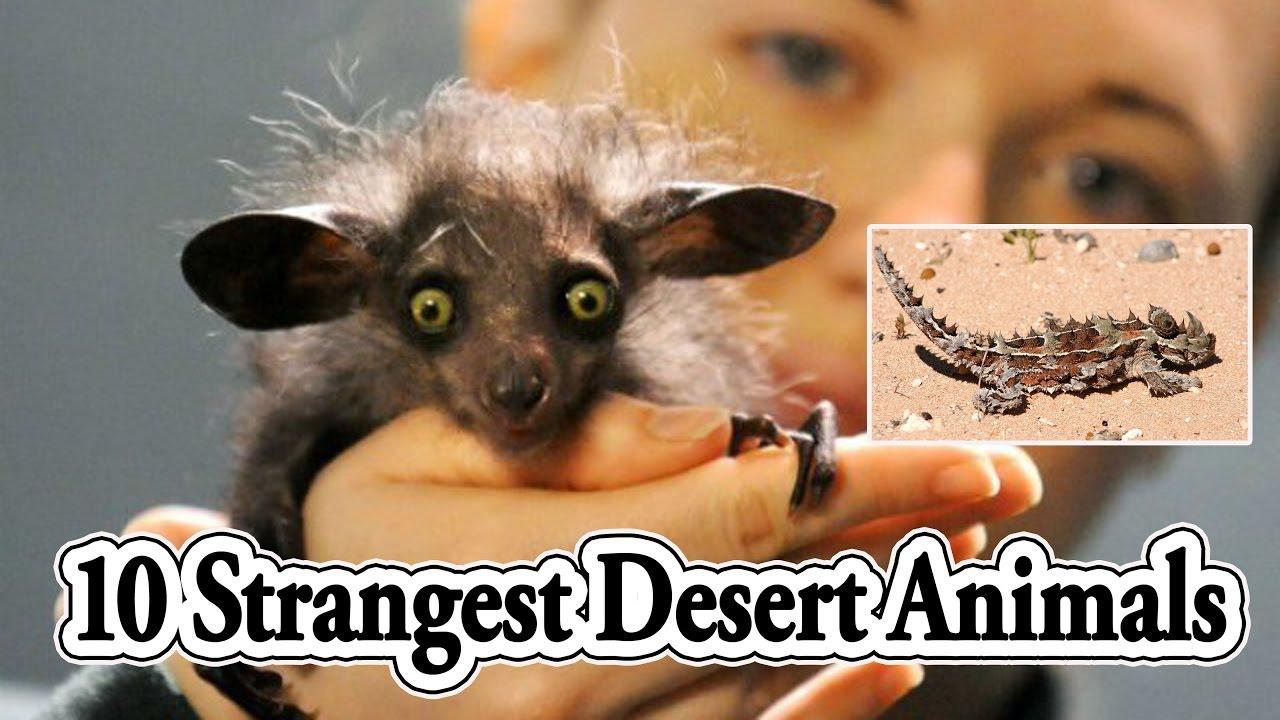 strange animals Top 10 Strangest Desert Animals In The World by top ten things