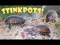 Feed My Pet Friday: Stinkpots!
