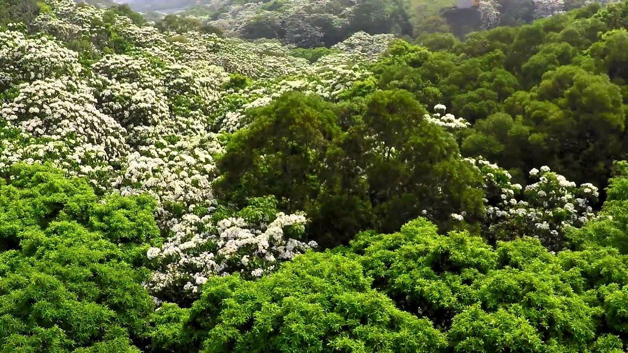 【另個角度。旅行】銅鑼天空步道油桐花盛開空拍 - 二部曲 - YouTube