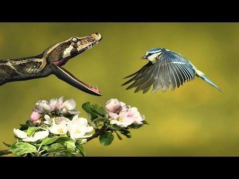 SNAKE IN APPLE! 3D Natural Snake Videos 1080p