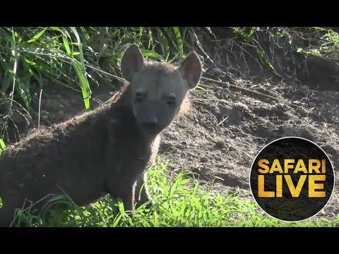 safariLIVE- Sunrise Safari - September 6, 2018