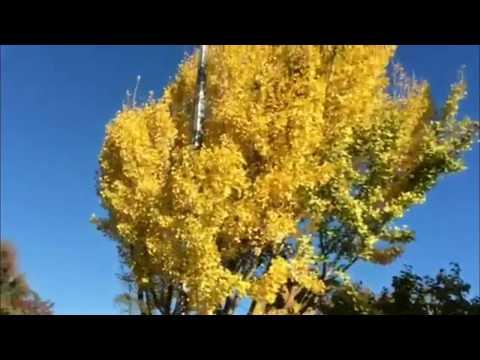Travel to United States: San Jose 2017 Fall Season