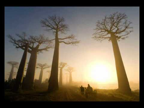 Клип If These Trees Could Talk - From Roots to Needles