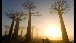 If These Trees Could Talk - From Roots To Needles (HD)