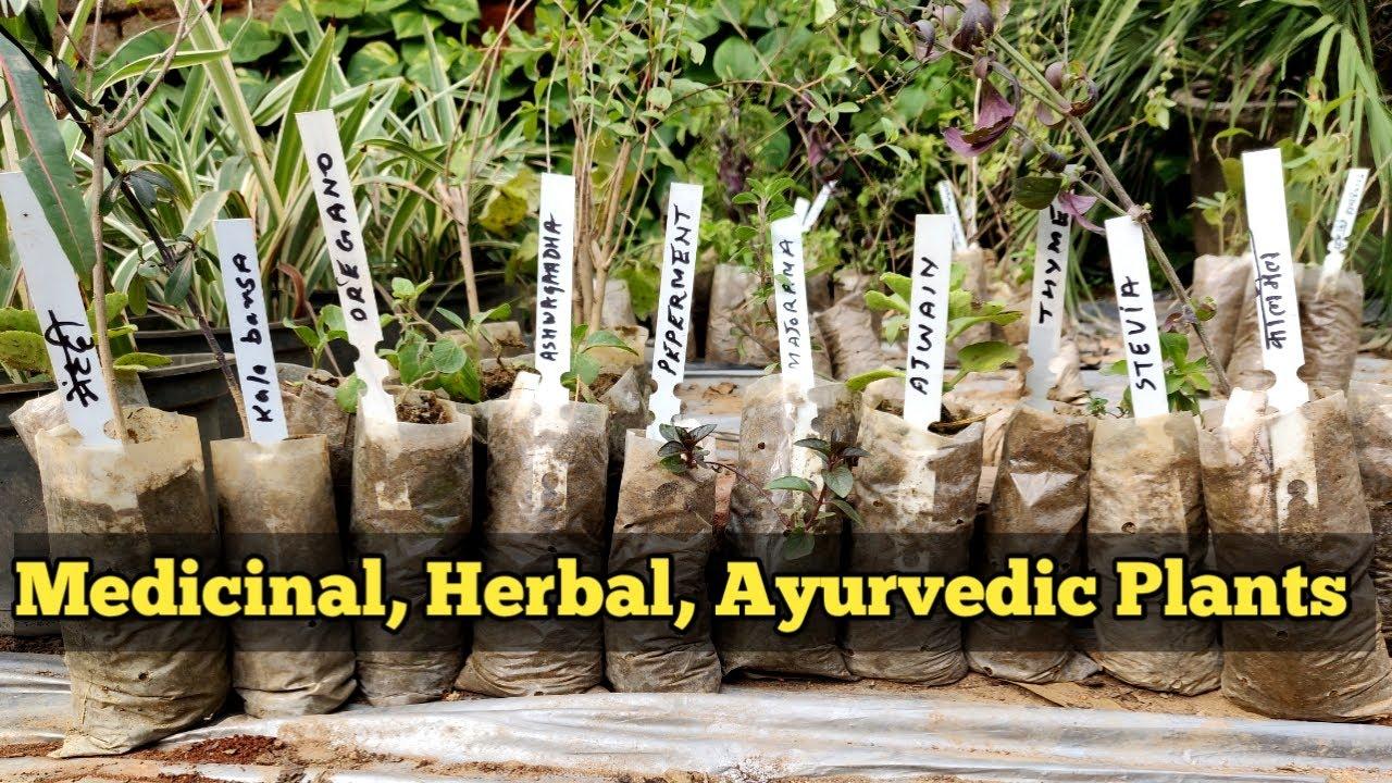 Rare Medicine Herb Plants India