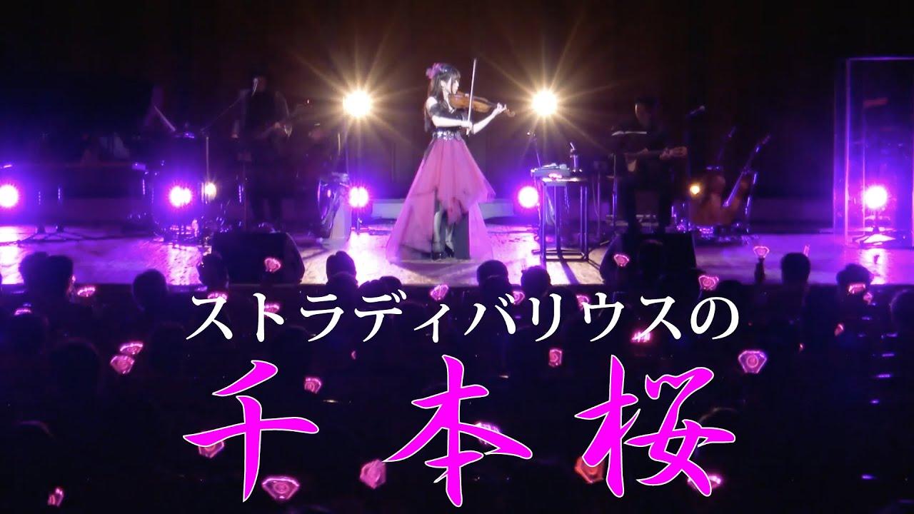 ストラディバリウス!今宵の『千本桜』はキレッキレ!/石川綾子 AYAKO ISHIKAWA -SENBONZAKURA on Stradivarius