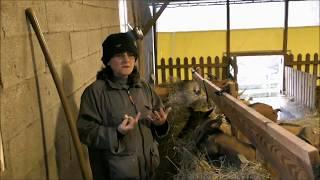 2/ Un élevage de chèvres étonnant (2ème partie)