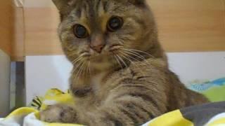 Кошка Ромашка - красотка)))
