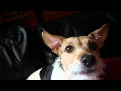 mika the singing dog