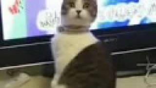dramatic cat (plus orchestral score)