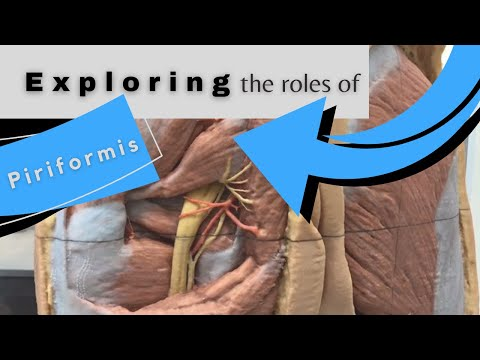 Exploring The Roles of The Piriformis at The Hip Joint