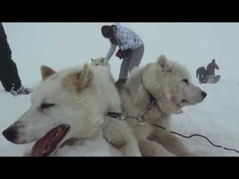 Dog Sledding Team Iceland  (from The Land Of Fire And Ice 2)