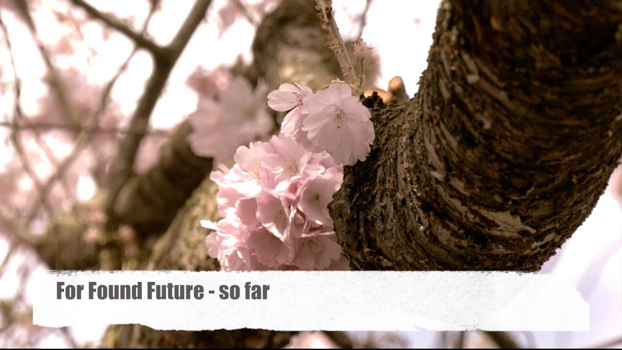Kirschblüten Hd