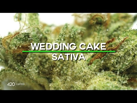 420 Central Strain Reviews - Wedding Cake