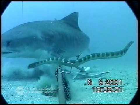 Shark Vs. Sea Snake