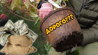 Сколько стоит посадить гортензию? Ответ скрягам, для которых все дорого!