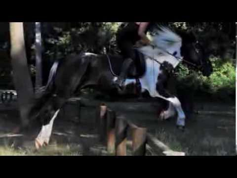 Evolution d'un cheval magique ...
