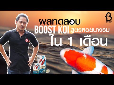 ทดสอบอาหารปลาคาร์ฟ Boost Koi สูตรหอยนารม 1 เดือน ล่ำจริงมั้ย?