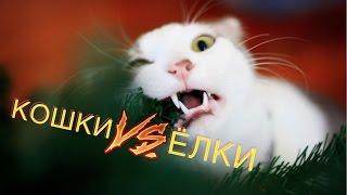 Коты vs ёлки! 🎅 🎄 😺 Подборка приколов 2017