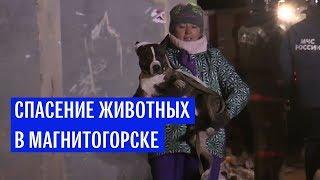 Спасение животных в Магнитогорске