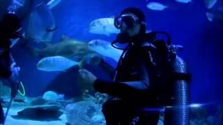 Download Video Dive With Sharks at Aquaria KLCC, Kuala Lumpur MP3 3GP MP4
