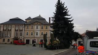 Vánoční strom pro Kutnou Horu