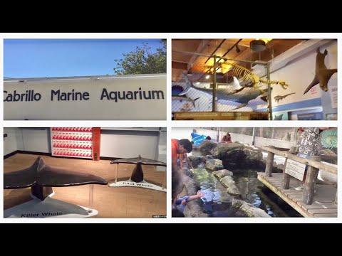 - Cabrillo Marine Aquarium, San Pedro, California