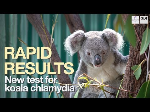 New Koala Chlamydia Test