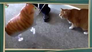 Коты и воздушные Шарики! Коты, кошки, котята