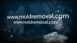Find a mold removal contractor
