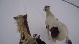 Course entre mes deux chevaux semi-liberté