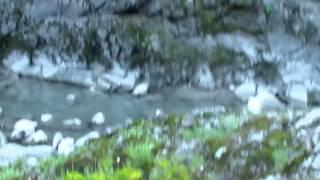 Алтай, Аскатский мост, Голубые озера, Катунь(Это видео создано с помощью видеоредактора YouTube (http://www.youtube.com/editor), 2014-06-07T10:11:21.000Z)