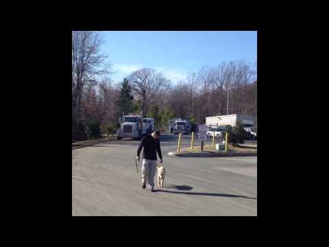 6-month-old-heeling-before/after!-amazing!-dog-training-woodbridge,-va