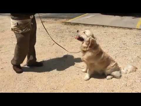 Sam and Finn Meeting A Stranger