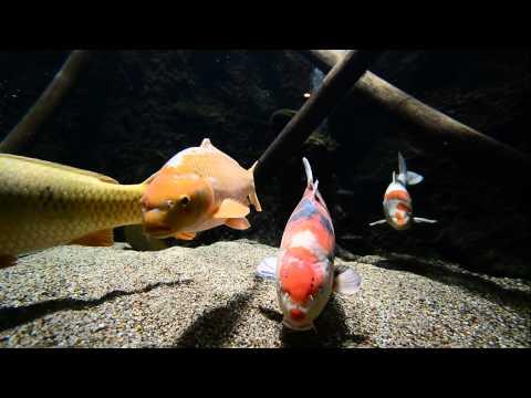 Artis Zoo Aquarium , Amsterdam July 2014