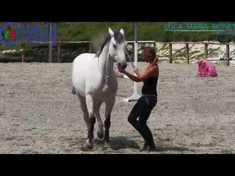 Come Far Sdraiare Un Cavallo.Il Gioco Da Terra Con Il Cavallo In Liberta Come Sistema Primario Di Educazione