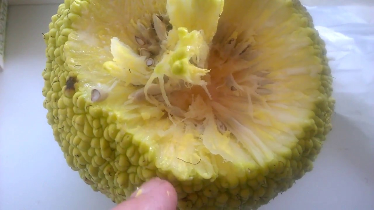 Настойка Адамово яблоко для суставов