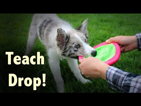How to Train Drop  - clicker dog training