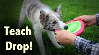 Teach your dog to DROP - Dog Training by Kikopup